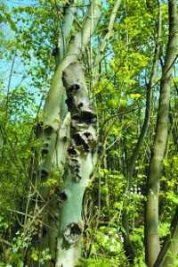 arbres mysterieux
