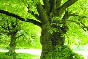 deux arbres remarquables