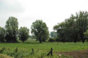 paysage plat avec arbres